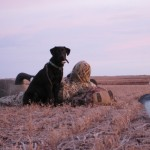 Hunting Dog & Decoys